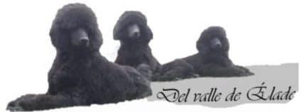 Caniches Gigantes Del Valle de Élade